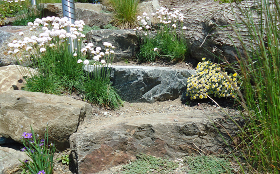 Native Plant Rockery